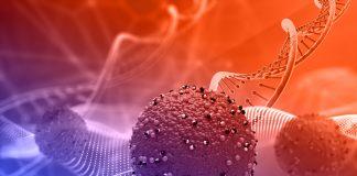 Vacina covid Brusque
